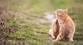 Heeft uw kat last van ongewenste beestjes?