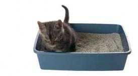 Blasensteine und Blasengries bei Katzen