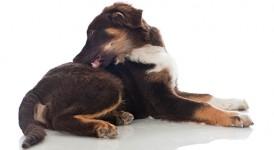 Zit uw hond lekker in zijn vel?